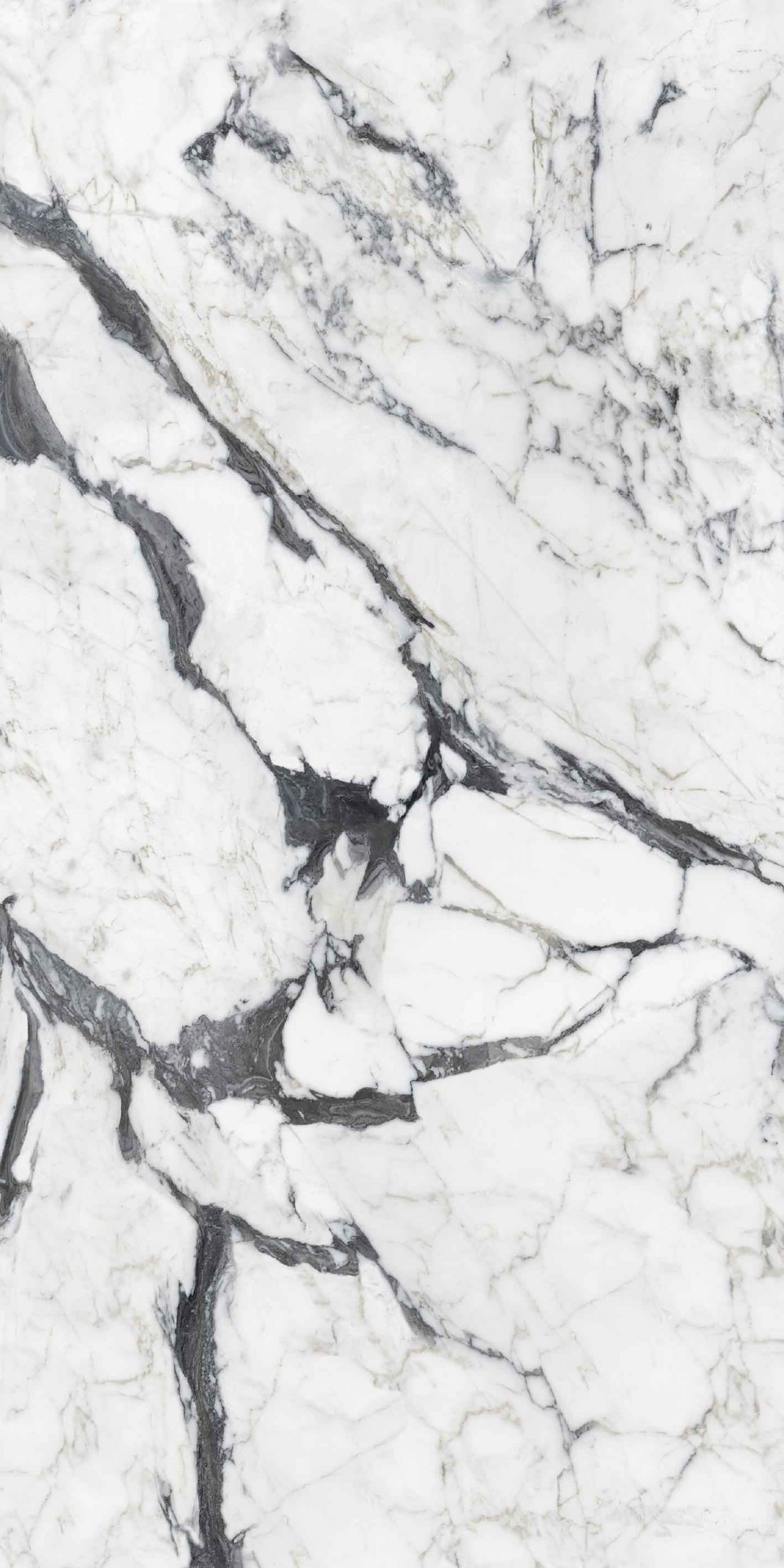Les Bijoux de Rex Calacatta Altissimo Blanc Glossy 6mm 160 x 320
