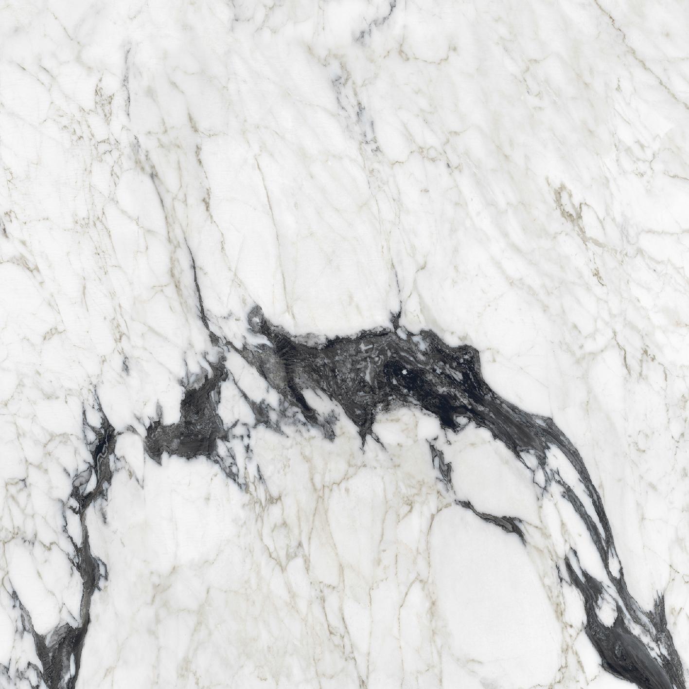 Les Bijoux de Rex Calacatta Altissimo Blanc Matte 10mm 80 x 80